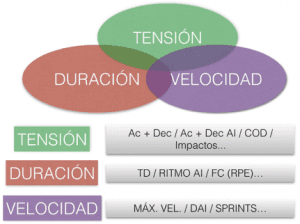 Niveles organizacional del principio de alternancia horizontal